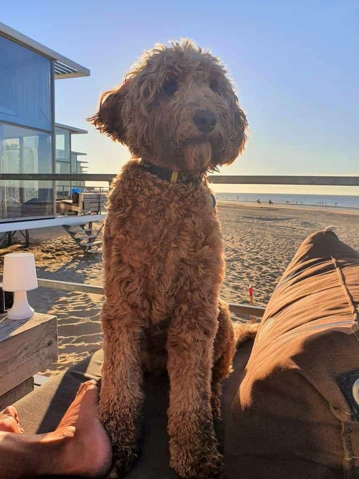 Strandhuisje Nieuwvliet met hond